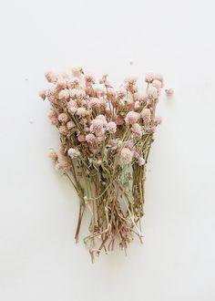 Wildflower Bridal Bouquets, Dried Flower Bouquet, Dried Flowers, Flower Bouquets, Fall Flowers, Wedding Flowers, Wedding Bouquets, Globe Amaranth, Real Plants