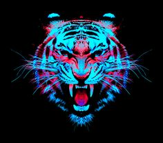 Tiger. Symmetry. Colour.