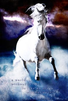 A world without horses is like an ocean without water. - Art by PixelGraphix, facebook/PixelGraphixDesign
