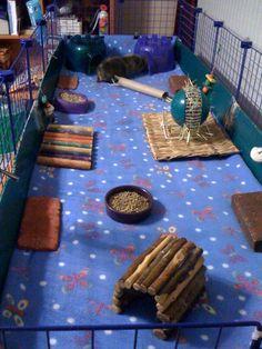 2x6 C & C cage for my piggies.