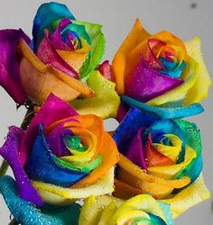 Prettiest Flower in the World | rainbow-roses-the-most-beautiful-flower-in-the-world