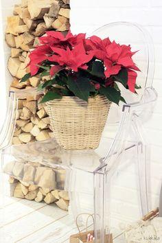Kukkala: #joulutähti