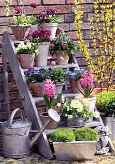 Spring is my Mum's favourite season as she can finally start growing flowers in…
