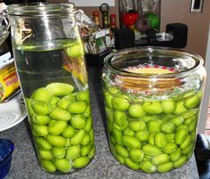 Curing fresh olives at home!