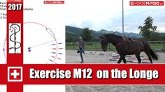 ch Online Training - Work-out Concentration & muscle training - horsephysio. Horse Exercises, Training Exercises, Lunging Horse, Cat Exercise, Horse Riding Tips, Muscle Training, Horse Training, Show Jumping, Horse Care