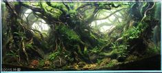 Aquascaping / Planted Tank / 2015 AGA Aquascaping Contest - Entry #263