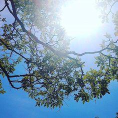 若葉と太陽 #landscape