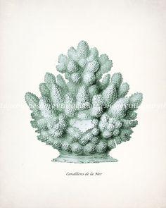 Vintage Natural History Haeckel Sea Coral by vintagebytheshore, $15.00