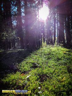 Moos im spätherbstlichen Wald