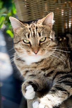 ser du katten din djupt inni augene ser du fort kva slektninga den har i varmare strøk hjelpes...glad min er mindre enn meg :D ...