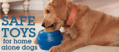 Safe toys for home alone dogs