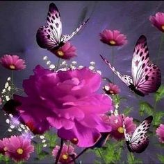 Gorgeous rose and butterflies Most Beautiful Butterfly, Beautiful Rose Flowers, Beautiful Birds, Purple Butterfly Wallpaper, Butterfly Flowers, Dancing Drawings, Good Night Gif, Beautiful Love Pictures, Butterfly Pictures