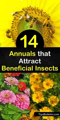 Learn how to protect your garden from destructive insects by drawing in good bugs with fennel, marigold, and yarrow plants. Control aphids in your yard by attracting ladybugs, parasitic wasps, and hoverflies. #annuals #plants #beneficialinsects Yarrow Plant, Gardening For Beginners, Gardening Tips, Flower Gardening, Planting Marigolds, Small Yellow Flowers, Easy Garden, Garden Ideas