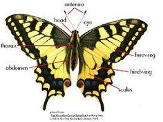 butterflies wings - Google Search