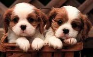Sweet doggy