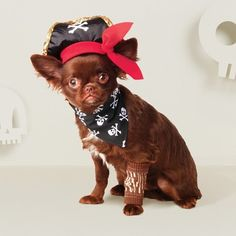 92f5cda0511e3 Your pup will be ready to take on Halloween in this Dog Costume from Hyde  and Eek! This pirate dog costume is perfect for you dog to wear on.
