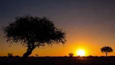 Static daytime timelapse of silhouette Shepherds tree, open African landscape while sun sets on horizon with sun flare in wilderness safari conservation park, Botswana. African Sunset, Sun Flare, Sun Sets, Conservation, Stock Footage, Wilderness, Safari, Silhouette, Landscape