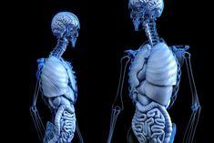 En het lijkt ook nog eens een heel belangrijke functie te hebben. Het nieuwe 'orgaan' bevindt zich net onder het oppervlak van de huid, rond het spijsverteringskanaal, de longen, de urinewegen en omringende vaten, aderen en het bindweefsel tussen spieren. Lang werd gedacht dat het dichte, verbindende weefsels waren.