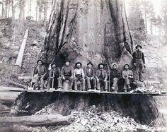 Timber cutters, Australia early c Giant Tree, Big Tree, Terra Australis, Sydney City, Land Of Oz, Australian Architecture, Old Maps, Monochrome Photography, Interesting History