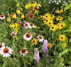 ohio wildflowers photos | ... native wildflowers for a long lasting and colorful wildflower stand