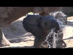 Baby Elephant Greets Zookeepers In The CUTEST Way! : LittleBudha.com – Amazing Videos, Stories and News from around the world. It's the little things in life that matter the most!
