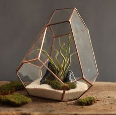 http://www.boredpanda.com/the-terrarium-re-imagined-i-make-strange-shapes-out-of-glass/
