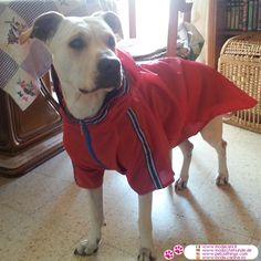 Red Raincoat for Large Dog
