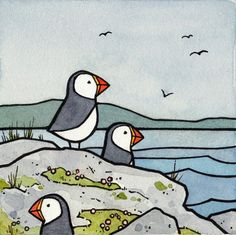 Puffins, watercolor and ink illustration