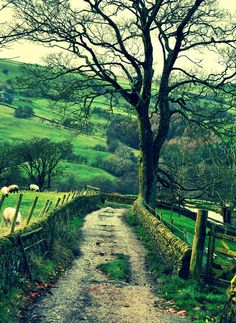 The kind of natural scenery photo that I like Beautiful World, Beautiful Places, Rivers And Roads, Places In England, Sky Sea, Back Road, Natural Scenery, Closer To Nature, Places To See