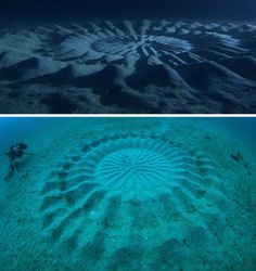Deep Sea Mystery: Diving to Solve Underwater Crop Circles || WebUrbanist