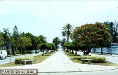 Avenida Quinta 5th Avenue in Miramar area of Havana Cuba