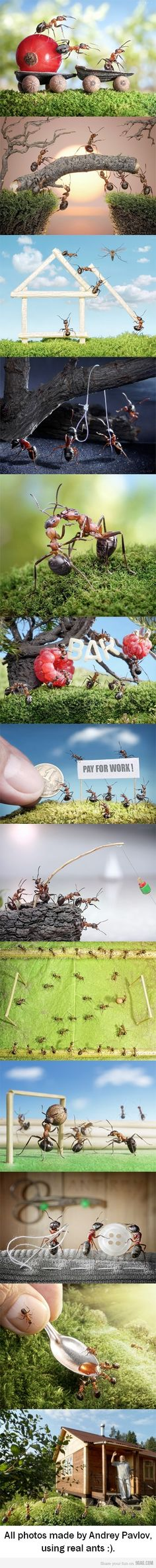 this dude actually does this for a living with real ants...can you say like a boss??