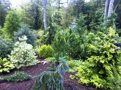Garden Tours MA, landscaping with colorful dwarf conifers Planting Shrubs, Garden Shrubs, Landscape Design, Garden Design, Evergreen Garden, Asian Garden, Front Yard Landscaping, Landscaping Ideas, Privacy Landscaping