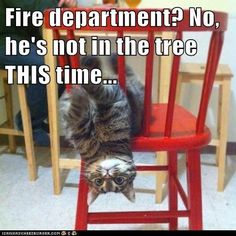 Hahaha.  This reminds me of our cat Smokey who got caught in a big speaker and I had to call the fire dept.