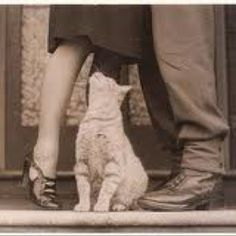 Couple in love saying goodbye WWII with Bobbi the cat