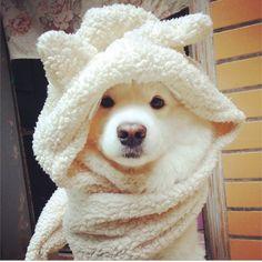 http://zoenchi.blogspot.com/2014/11/best-fluffy-friends.html