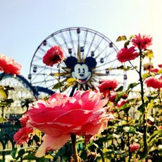 Love the flowers at Paradise Pier, Disney California Adventure Park