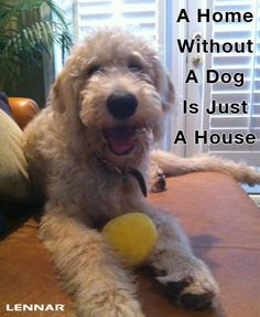 A Home Without A Dog Is Just A House! #quote #doodle #goldendoodle #labradoodle