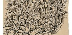 Neuroplasticity As Seen by Neuroscience Pioneer Santiago Ramón Y Cajal 100 Years Ago Neuroplasticity, Neuroscience, Ramones, Weisman Art Museum, Neural Connections, Mental Health Problems, Medical Illustration, Brain, Creativity