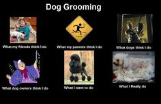 Dog grooming haha I love this! Dog Grooming Shop, Dog Grooming Salons, Dog Grooming Business, Dog Shop, Creative Grooming, What Dogs, Paws And Claws, Dog Care, Your Dog