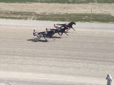 Harness Racing, Camel, Action, Animals, Group Action, Animales, Animaux, Camels, Animal