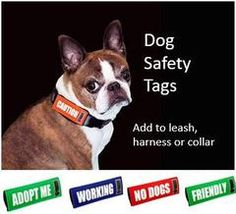 Dog  Safety Tags for Collars &  Leashes