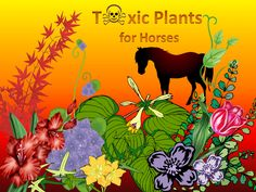 Toxic plants for horses