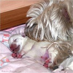 Mother's love....only 3 days old!