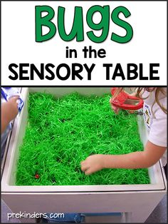 Bugs Activities and Lesson Plans for Pre-K and Preschool - PreKindersYou can find Preschool lesson plans and more on our website.Bugs Activities and Le. Pre K Lesson Plans, Lesson Plans For Toddlers, Kindergarten Lesson Plans, Preschool Lessons, Daycare Lesson Plans, Insect Activities, Sensory Activities Toddlers, Pre K Activities, Preschool Themes