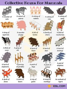 Useful Collective Nouns For Animals in English - 7 E S L Animal Group Names! Learn useful list of collective nouns for animals (turkeys, owls, crows,.) with example sentences, video and ESL printable worksheets. English Writing Skills, Learn English Grammar, English Vocabulary Words, English Phrases, English Idioms, English Language Learning, English Study, Learn English Words, English Lessons