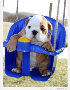 #dog #cute #funny #hang in there