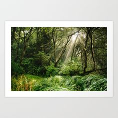 In the Forest Art Print by Kevin N. Murphy - $19.00 -So beautiful!