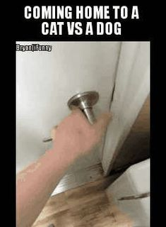 coming, home, to, dog, cat - iFunny :)