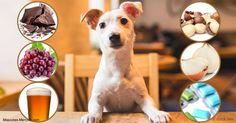 Investigadores italianos publicaron un estudio de la comida humana toxica para las mascotas; el chocolate y las nueces de macadamia están incluidos en la lista.